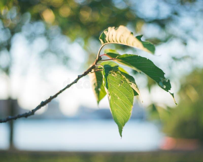 Lumière de Sun sur des feuilles d'arbre photographie stock libre de droits