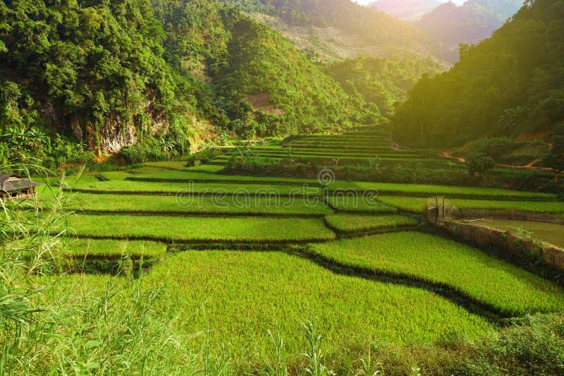 Lumière de Sun sur le gisement en terrasse vert de riz photo libre de droits