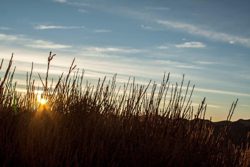 Lumière du lever de soleil derrière des usines photo stock