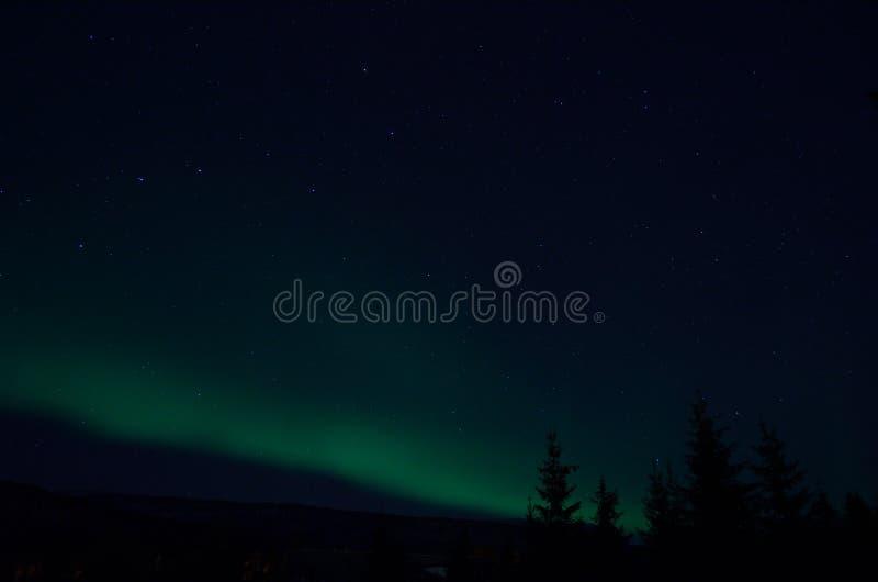 Lumière du nord d'aurora borealis sur le ciel nocturne d'hiver au-dessus des arbres images libres de droits