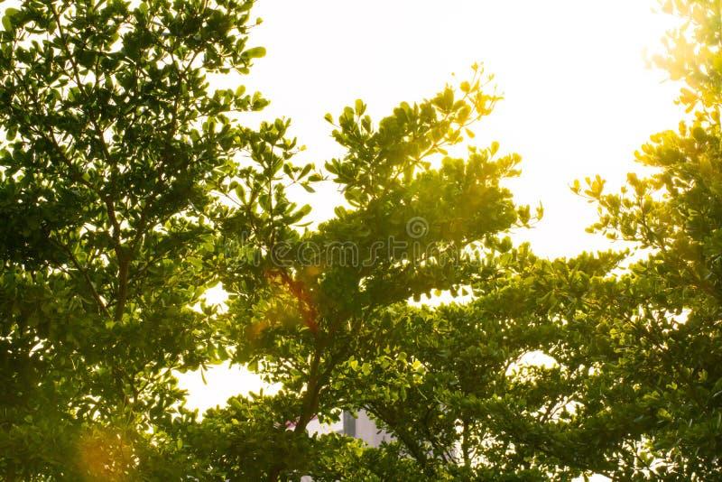 Lumière du soleil à travers Bush photo stock
