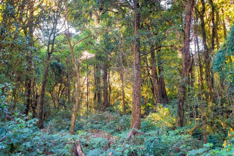 Lumière du soleil avec des arbres dans la forêt image stock