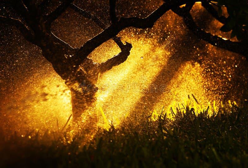 Lumière du soleil chaude de coucher du soleil à la forêt d'automne photos libres de droits