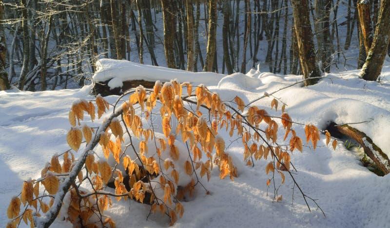 Lumière du soleil dans la forêt photos stock