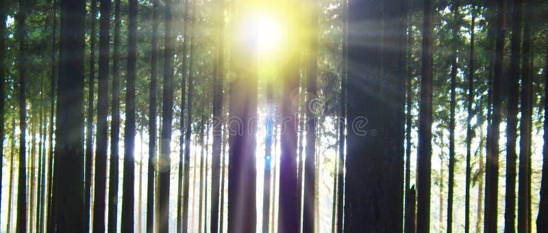 Download Lumière Du Soleil Dans La Forêt Photo stock - Image du lames, beau: 56482520