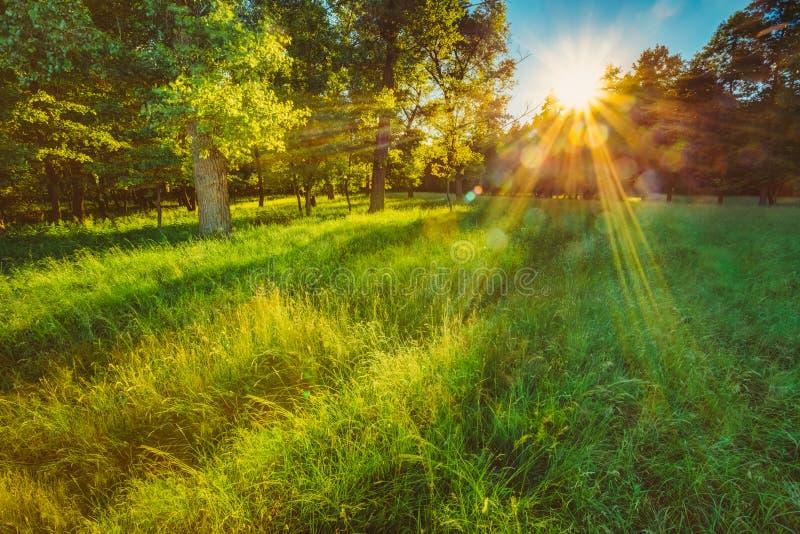 Lumière du soleil dans la forêt conifére verte, russe photographie stock libre de droits