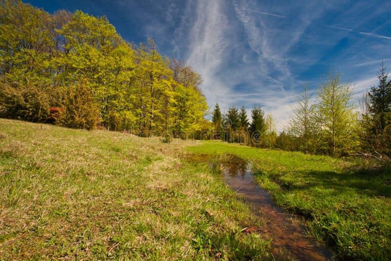 Lumière du soleil dans la forêt verte photographie stock libre de droits