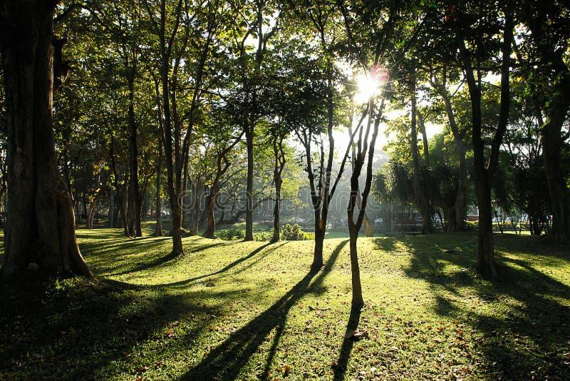 Lumière du soleil dans le matin de jardin images stock