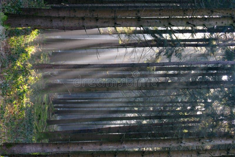Lumière du soleil de forêt   image libre de droits