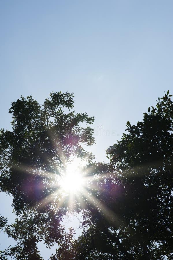 Lumière du soleil de fusée par l'arbre images stock