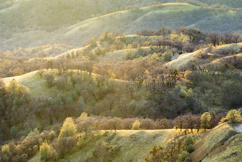 Lumière du soleil de région boisée photographie stock