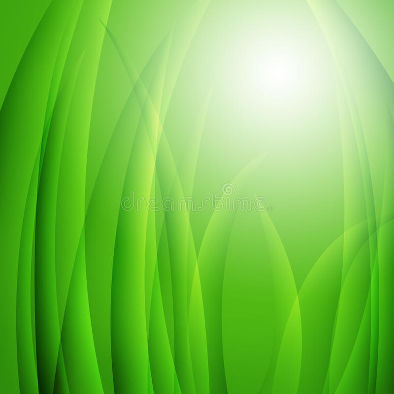 Lumière du soleil de soirée dans l'herbe verte grande illustration de vecteur