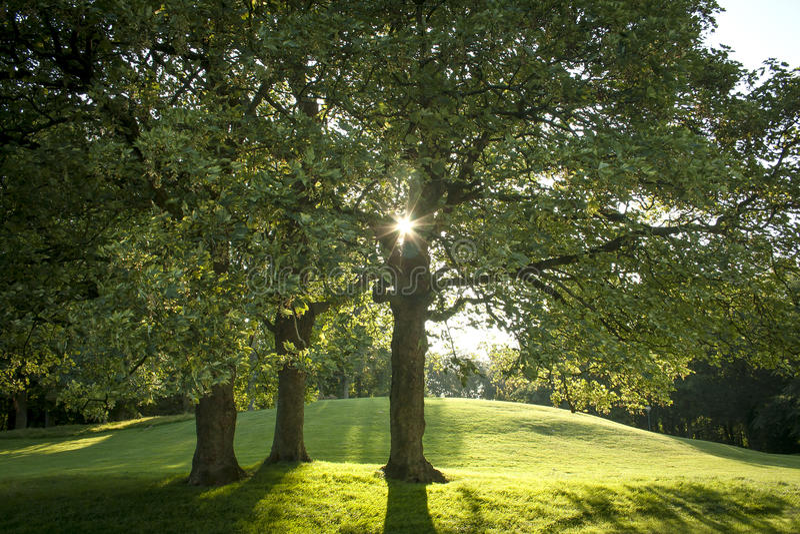 Lumière du soleil derrière trois arbres magnifiques image stock