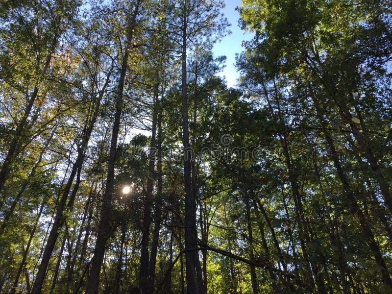 Lumière du soleil par des arbres photo libre de droits