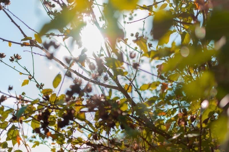 Lumière du soleil par des lames d'automne photographie stock libre de droits