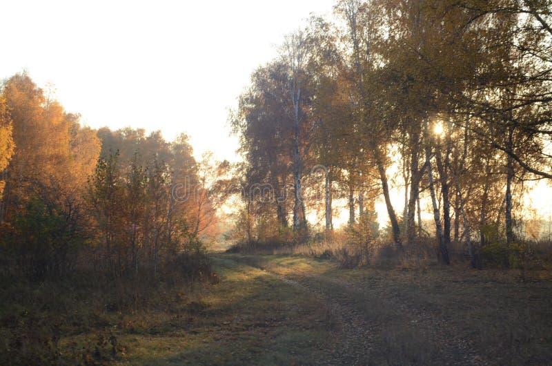 Lumière du soleil par le feuillage jaune photo stock
