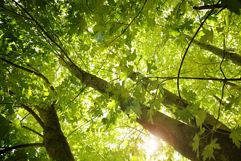 Lumière du soleil par les arbres images libres de droits