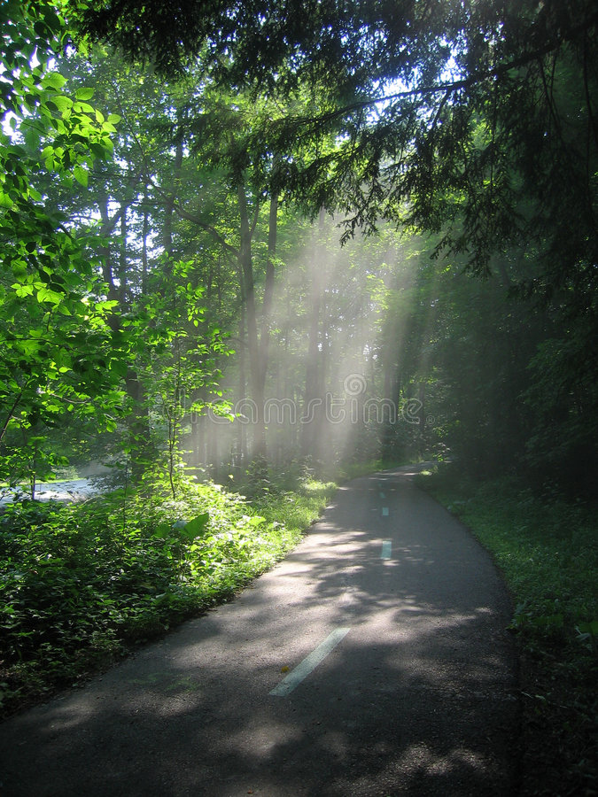 Lumière du soleil par les arbres photos stock