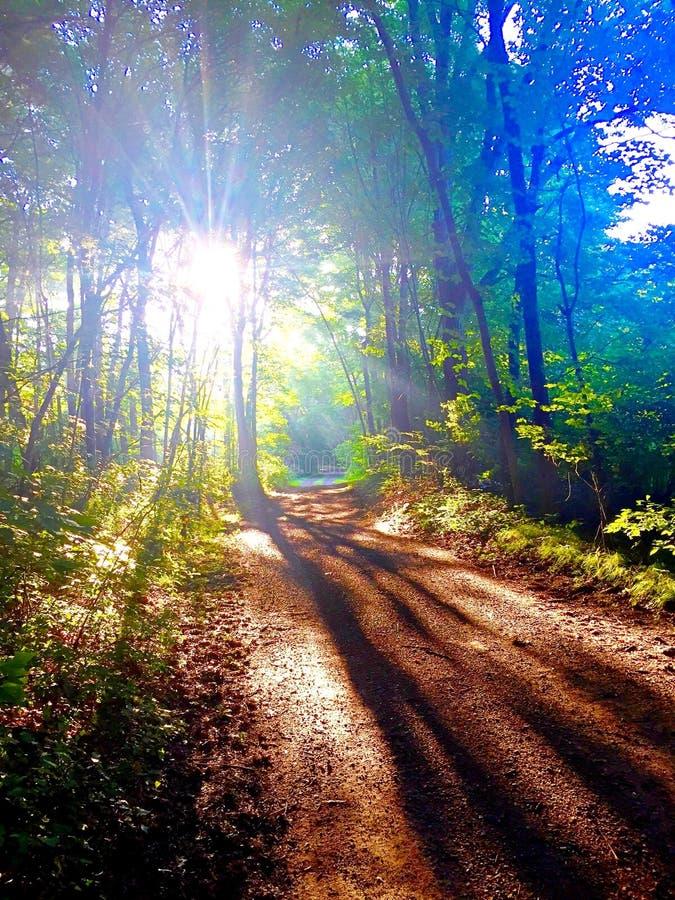 Lumière du soleil par les arbres sur le chemin de terre images stock