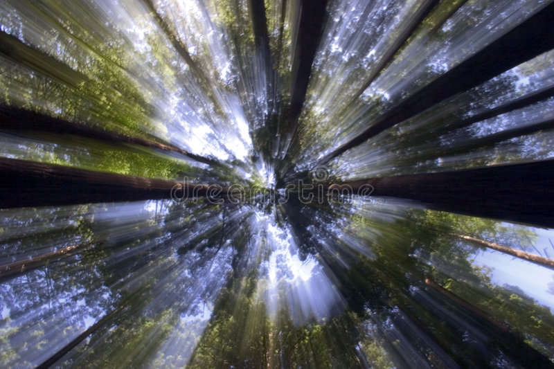 Lumière du soleil par les cimes d'arbre photographie stock libre de droits