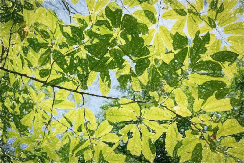 Lumière du soleil par les feuilles vertes r photos libres de droits