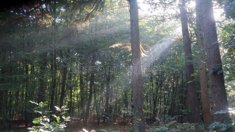 Lumière du soleil Ray de forêt image stock