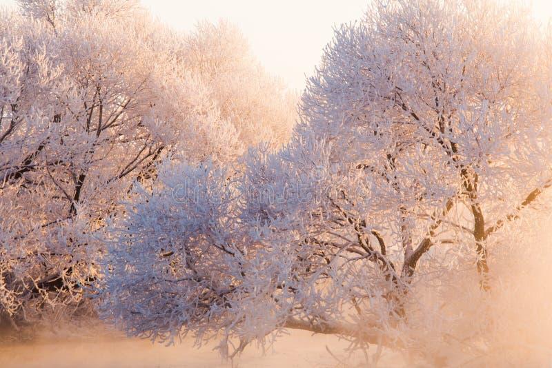 Lumière du soleil rose dans l'horaire d'hiver photo stock