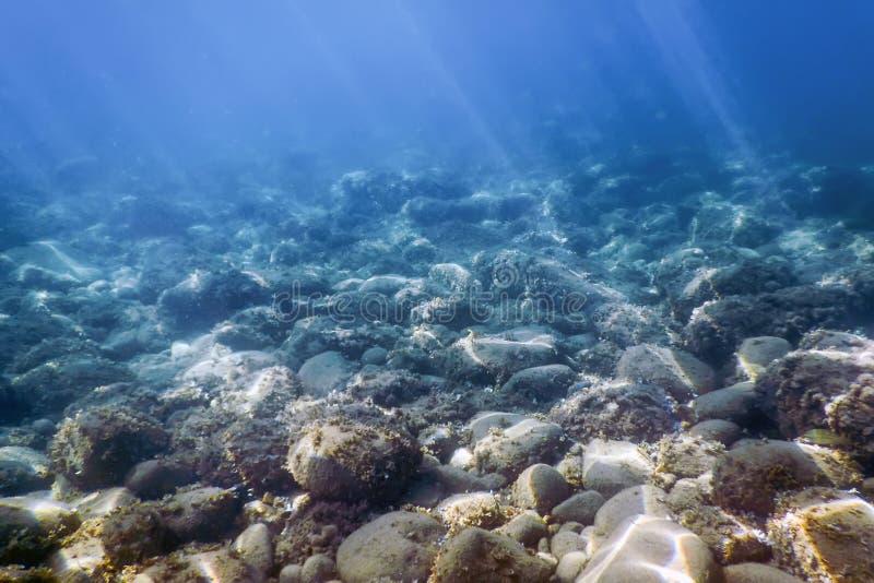 Lumière du soleil sous-marine de roches de vie marine, la vie sous-marine photographie stock libre de droits