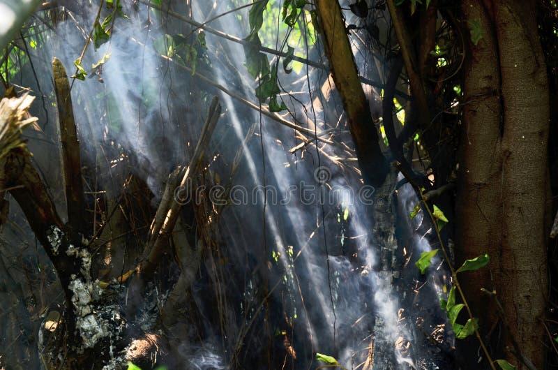 Lumière du soleil sur la fumée du feu photo libre de droits