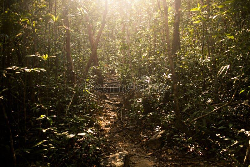 Lumière du soleil sur une traînée de jungle à travers Koh Rong Sanloem Island, Cambodge image stock