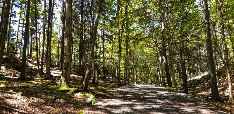 Lumière du soleil tachetée filtrée à l'aide des arbres photos stock