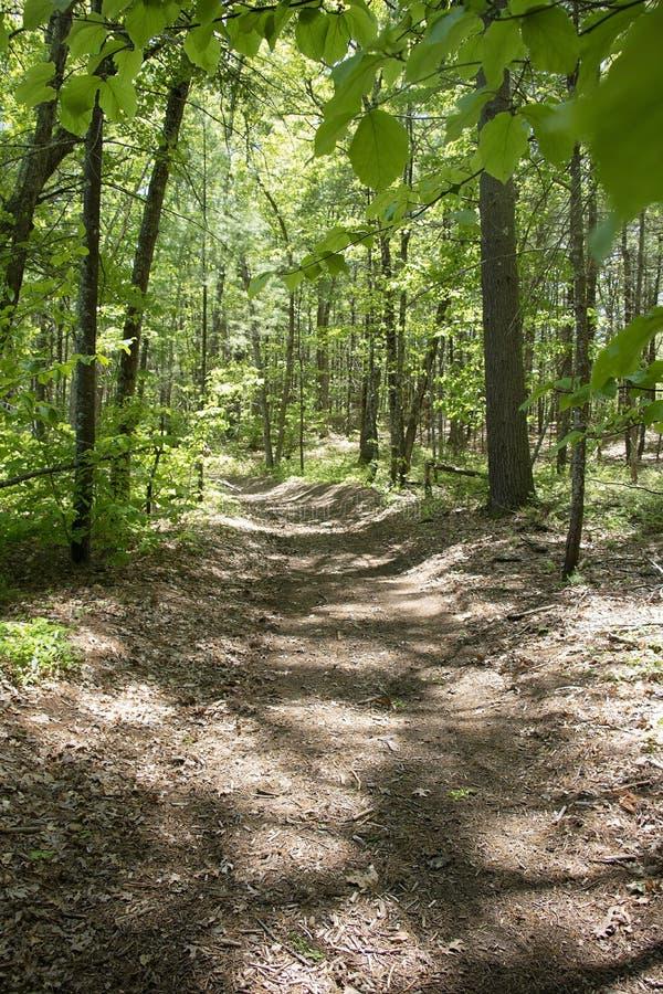 Lumière du soleil tachetée sur Forest Path images libres de droits