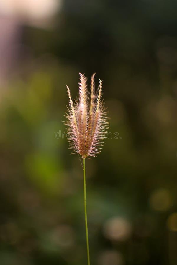 Lumière du soleil velue de plan rapproché de fleur image libre de droits
