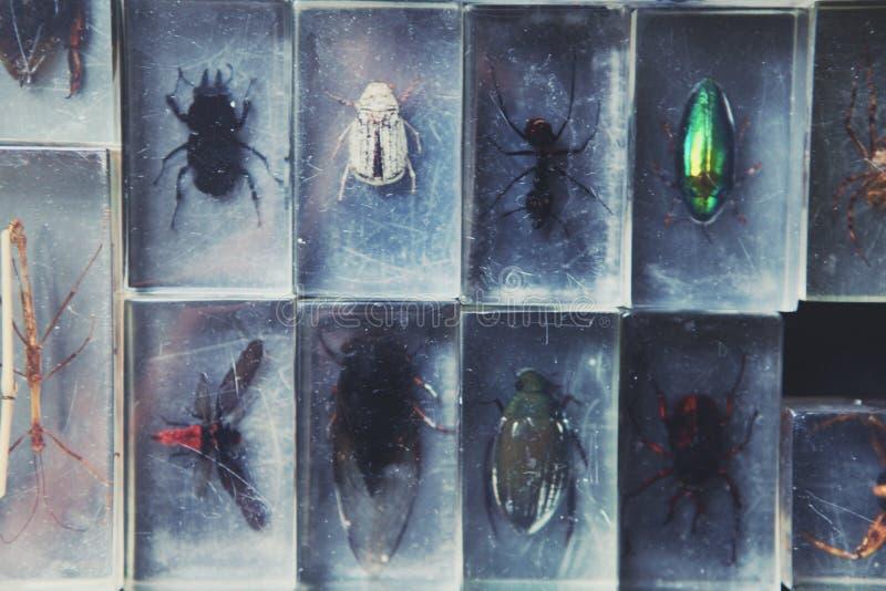 Lumière en verre de jour de collection d'insecte de biologie image libre de droits