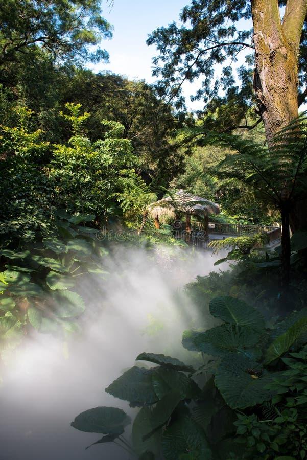 Lumière et brouillard dans la forêt images libres de droits