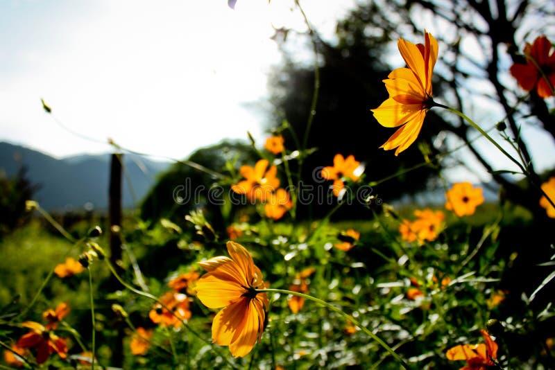 Lumière et fleurs de Sun photo stock