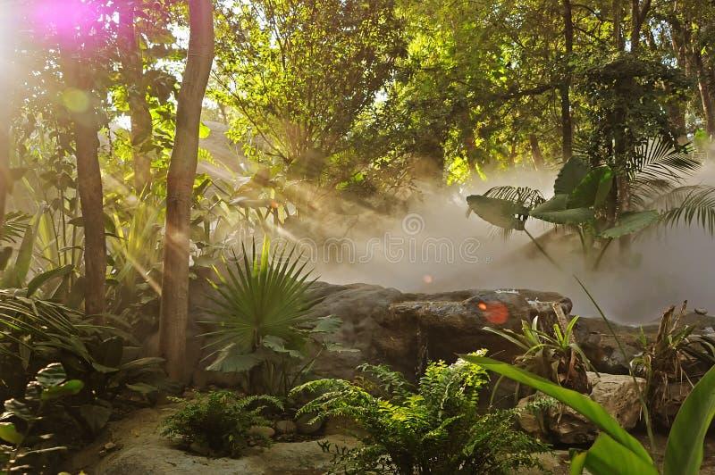 Lumière et forêt photo libre de droits