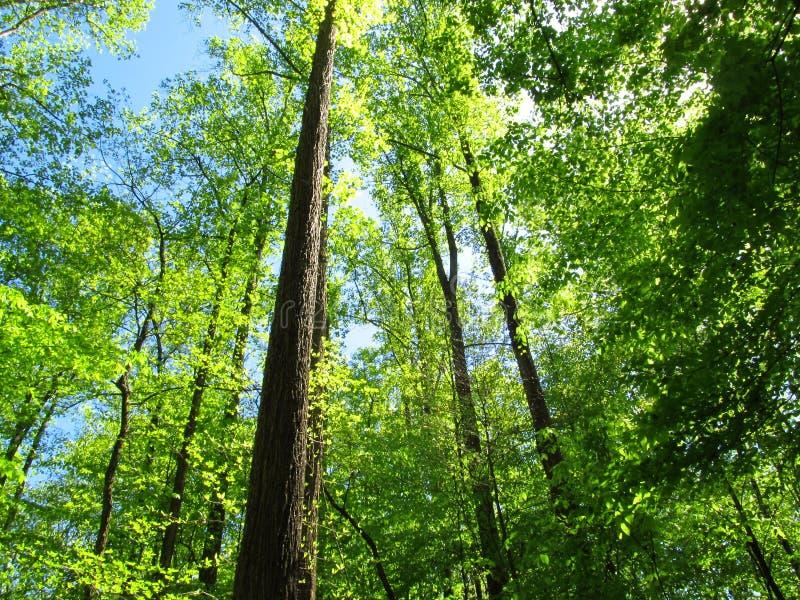 Lumière et ombres dans le Forest2 images libres de droits