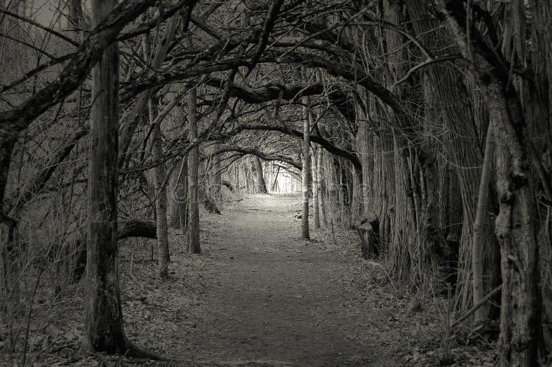 Lumière fantasmagorique à l'extrémité photo stock