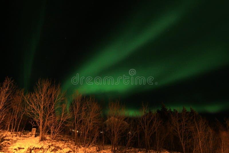 Lumière nordique au-dessus des arbres photos libres de droits