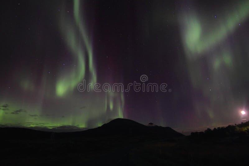 Lumière nordique au-dessus des côtes de Lofotens photo libre de droits