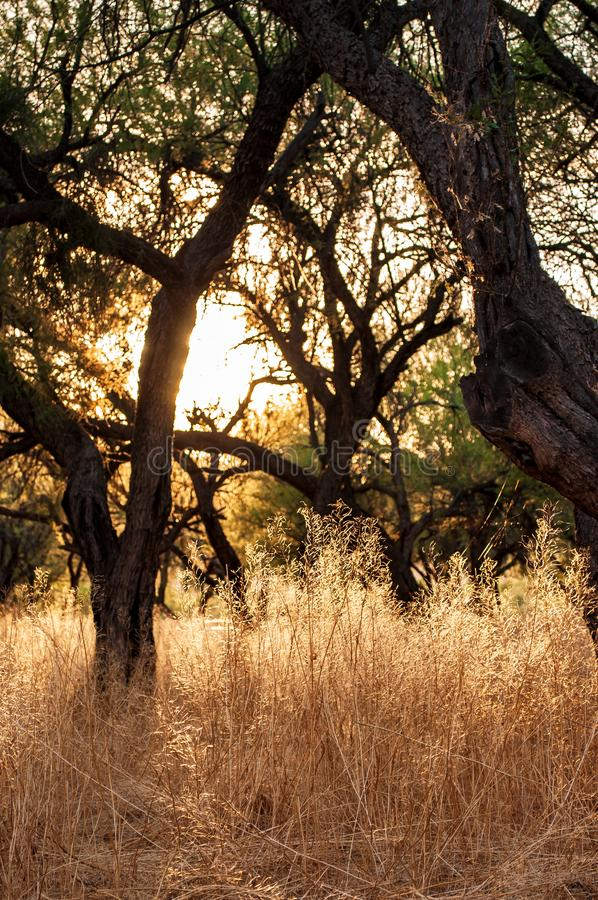 Lumière par les arbres et les mauvaises herbes sèches photo libre de droits