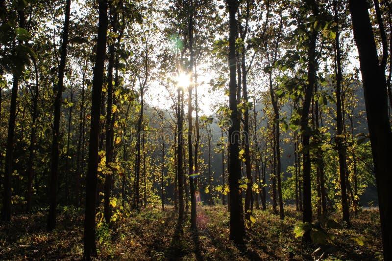 Lumière par les bois images stock