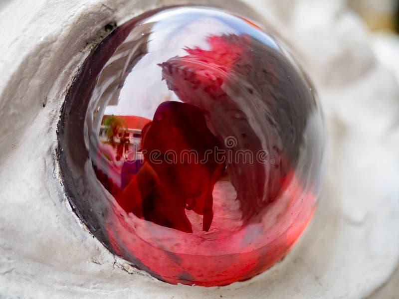 Lumière rouge de couleur d'oeil, serpent dans le temple de Nakhpro, Bangkok, Thaïlande image stock