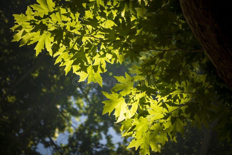 Lumière sur des feuilles photo stock