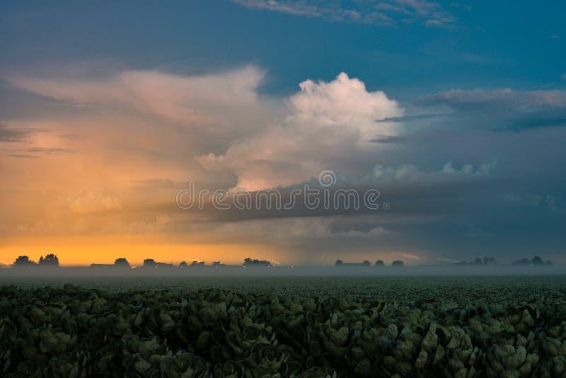 Lumières éloignées de tempête et de serre chaude avec le brouillard peu profond photographie stock libre de droits