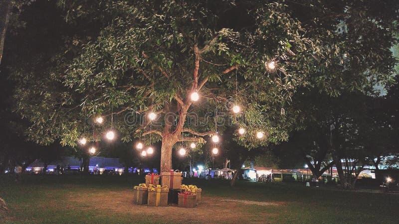 lumières accrochant sur l'arbre vert de feuille photos libres de droits