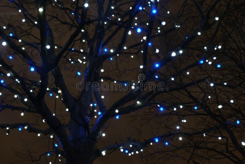 Lumières d'arbre photo stock