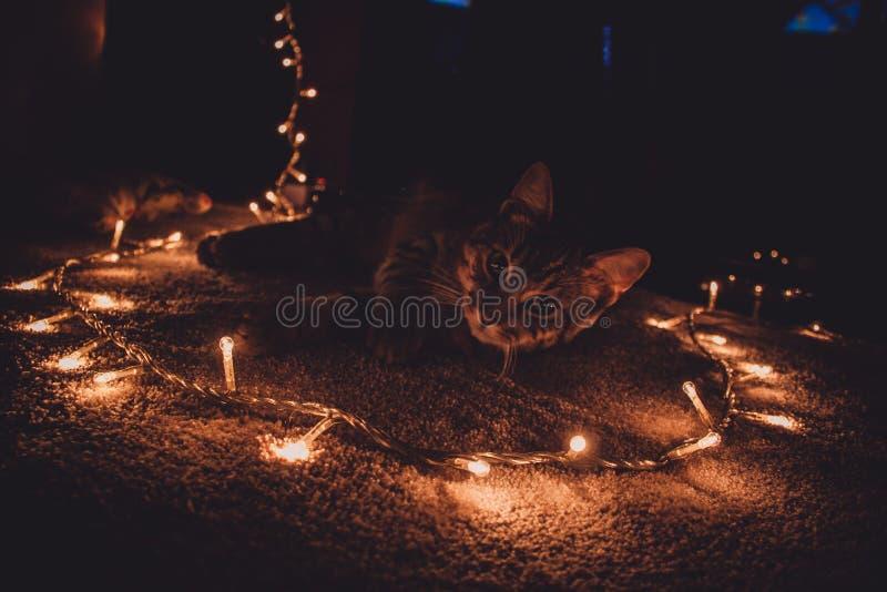 Lumières 2 de chat et de Noël photographie stock libre de droits