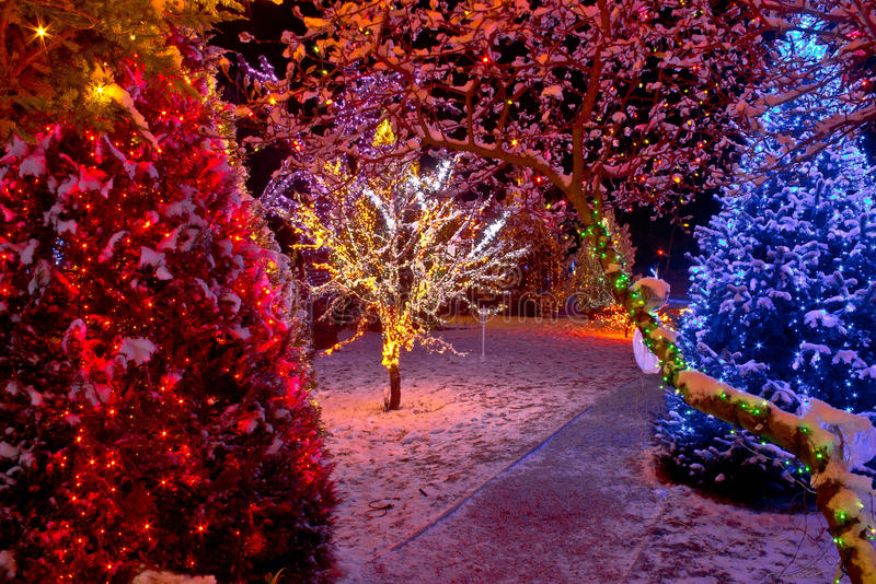 Lumières de Noël colorées sur des arbres photos libres de droits
